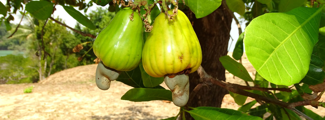 Thailand treehouse holidays - organic food